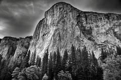 The Textured Face of El Capitan (Black & White, Yosemite National Park) (thor_mark ) Tags: 3000feethighgranitemonolith 900meterhighgranitemonolith blackwhite blueskieswithclouds capturenx2edited centralyosemitesierra colorefexpro day5 dioriteblob elcapitan hillsideoftrees landscape largedioriteblob lookingnorth mountains mountainsindistance mountainsoffindistance nawall nature nikond800e northamericawall outside pacificranges portfolio project365 resemblingnorthamerica salathéwall sierranevada silverefexpro2 totokonoolah trees triptopasoroblesandyosemite yosemitenationalpark yosemitevalley yosemiterittersierranevada california unitedstates