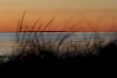 Through the Grass (brucetopher) Tags: orange red sunset sky skies water sea ocean beach silhouette redsky seascape bay coast coastal