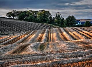 Brookfield Landscape