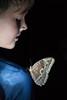 Costa-Rica-5958.jpg (ingmar_) Tags: costarica fauna gezin insect vakantie vlinder zomervakantie