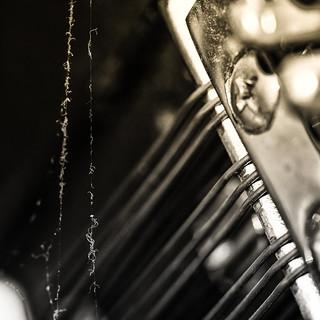 Spider Music