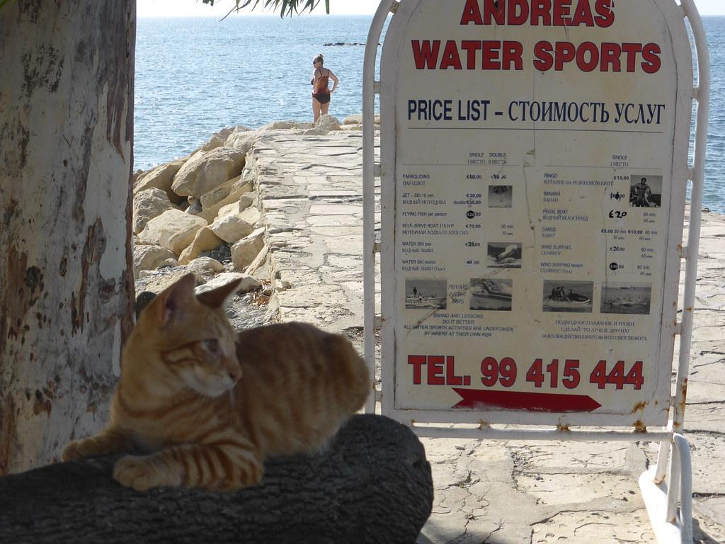 limassol chat La cérémonie s'est déroulée simultanément dans plusieurs centres de formation à limassol, paphos et larnaca le ministre de la défense,  chat barry chypre.