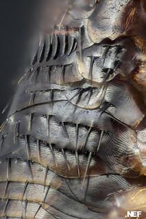 Flea Armor