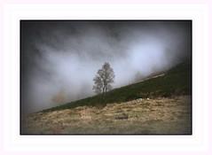 Seul dans la brume je me tiens debout . . . (nickylechatreux) Tags: forêts arbre montagne nature nuages solitude cof001 landscapes paysage brume flanc de ciel
