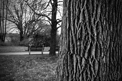 Sitting (RickLev) Tags: 5d bench canon levesque light markii nature picture rick river sky treescenes trees water branches image leaves peaceful