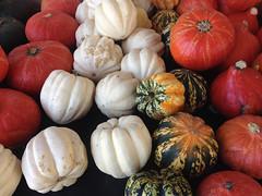 Crop of autumn: squash.  New Mexico, USA. (cbrozek21) Tags: squash pumpkin cucurbita fruit crop autumn fall newmexico color colorfulfruits food