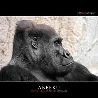 ABEEKU