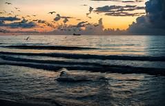Dawning on South Beach. (Aglez the city guy ☺) Tags: dawning seashore seascape seagull sea earlyinthemorning waves beachscape beach beachshore shore waterways dawn walkingaround outdoors urbanexploration miamibeaches sky colors clouds