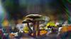 Cosmic rain. (look to see) Tags: paddestoelen mushroom bokeh flare cosmicrain light licht color kleur spa belgium 2017 vintagelens helios44
