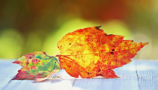 The Splendor of Autumn � �