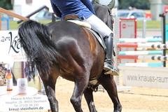_MG_5956 (dreiwn) Tags: ridingarena reitturnier reiten reitplatz reitverein reitsport ridingclub equestrian showjumping springreiten horse horseback horseriding horseshow pferdesport pferd pony pferde tamronsp70200f28divcusd