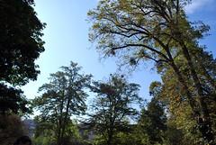 Parc Saint-Désert (Saône-et-Loire) (odile.cognard.guinot) Tags: automne parc arbres saôneetloire bourgognefranchecomté bourgogne saintdésert