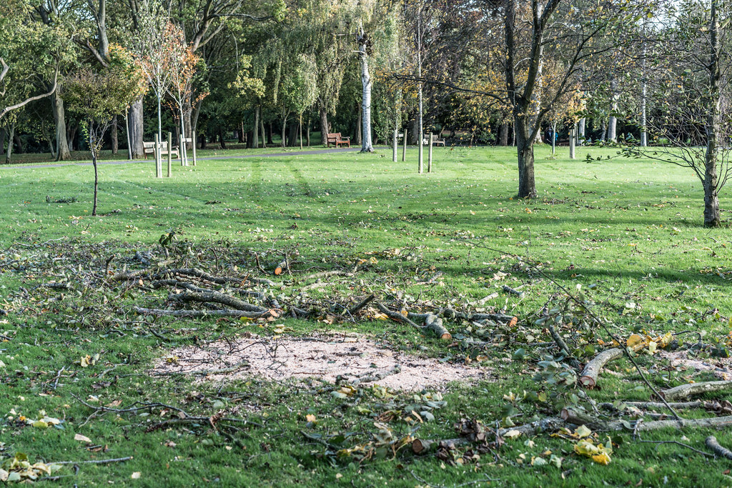 A VISIT TO THE BOTANIC GARDENS ON THE DAY AFTER AFTER STORM OPHELIA [MINIMAL STORM DAMAGE]-133306