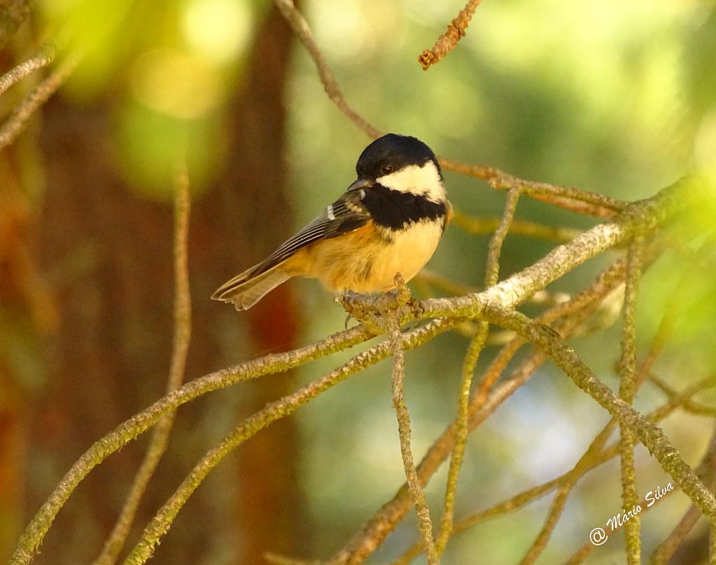 Águas Frias (Chaves) - ... pássaro colorido ...