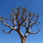 Karoo National Botanical Gardens - Worcester thumbnail
