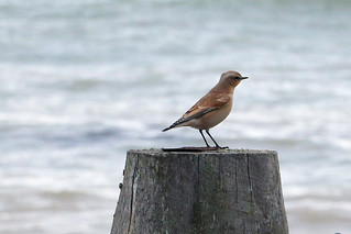 Bird on groyne 1