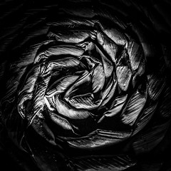 Dark Spiral. HMM! (in Explore) (Uup115) Tags: macromondays spiral hmm macro bw lumia1520 cameraphone texture fiber