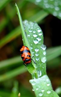 rain dropes on beetle