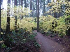 Pacific Spirit Regional Park (misiekmintus) Tags: vancouver bc britishcolumbia canada pacificnorthwest nature natur naturaleza przyroda fall forest pacificspiritregionalpark trees