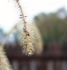 A break from the rain (cynthiarobb) Tags: