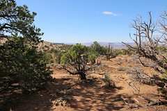 IMG_0121 (tecumseh1967) Tags: 2017 canyonsland mesaarch nationalpark rotel usa wanderreise