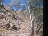 MacDonnell Ranges hillside near Simpson's Gap (Mary Gillham Archive Project) Tags: 10377 1959 australia landscape northernterritory planttree simpsonsgap