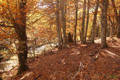 para perderse... (cienfuegos84) Tags: hayedo naturaleza rio nature river hojas autum otoño leaf