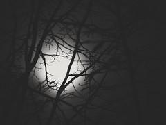 (ZinckPhotography) Tags: black white monochrome spooky fog foggy tree mono blackandwhite bw schwarzundweis mist sky flickr olympus noiretblanc halloween moon simplistic simple