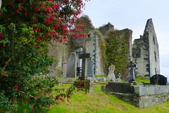 All Souls' Day - Allerseelen (ivlys) Tags: irland ireland eire countydonegal fanadpeninsula rathmullan abbey abtei ruine ruin fuchsie fuchsia strauch bush blume flower pflanze plant allerseelen allsaintsday ivlys