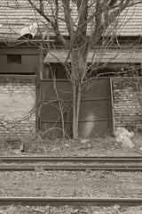 _MG_4307 (daniel.p.dezso) Tags: kapu szeged tisza pályaudvar elhagyatott abandoned
