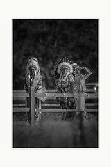 Three chiefs (Krasne oci) Tags: indian man chief nature bw monochrome people candidportrait evabartos artphoto artphotography photographicart classic indigenouspeople