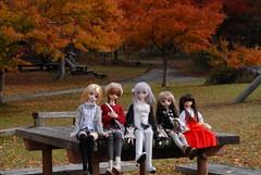 DSC_0106 (UrchinD) Tags: dollfiedream superdollfie busoushinki
