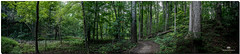 SEPTEMBER 2017 NM1_5120_1466-222 PANO (Nick and Karen Munroe) Tags: 2470f28 nikon2470f28 pano panorama trees tree forest forests woods heartlake heartlakeconservationarea heartlakeconservation conservation conservationareas beauty brampton beautiful green hike trail canada colour colors colours nikon nickmunroe nickandkarenmunroe nature nickandkaren nikond750 d750 munroedesignsphotography munroedesigns munroephotography munroe karenick23 karenick karenandnickmunroe karenmunroe karenandnick karen ontario outdoors ontariocanada