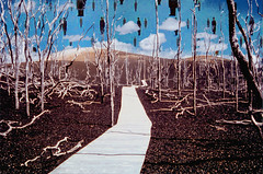 Visitors to Desolation Trail (byzantiumbooks) Tags: desolationtrail surreal magritte werehere hereios