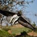 Mara Safari-2288.jpg