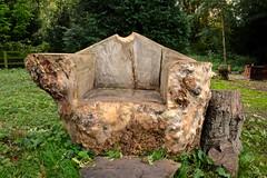 Nightmare on Elm Seat (violetchicken977) Tags: benchmonday elmtree burrelm