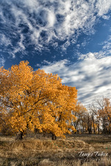 October 21, 2017 - Fall foliage and blue skies at the Rocky Mountain Arsenal. (Tony's Takes)