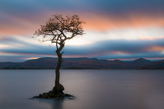 Milarrochy Bay Sunset (roseysnapper) Tags: lochlomond nikkor2470f28 nikond810 circularpolarizer longexposure loch scotland trossachs clouds lake sky sunset tree water landscape mountain dusk pastel abigfave