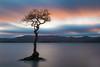 Milarrochy Bay Sunset (roseysnapper) Tags: lochlomond nikkor2470f28 nikond810 circularpolarizer longexposure loch scotland trossachs clouds lake sky sunset tree water landscape mountain dusk pastel abigfave