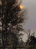 The bloody red sun (glessew) Tags: sun soleil sonne zon rot red rouge rood landschap landscape landschaft veluwe gelderland empe nederland boom arbre tree baum empenseheide