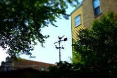 beep beep (KevinIrvineChi) Tags: beep beepbeep roadrunner weathervane weather n e w s north south east west directions wind apartmentbuildings trees green tiltshift tilt shift aperture priority sony dscrx100 lakeview sky blue gree up chicago chicagoist consumerist rooftops window brick bricks curbedchicago siding center northcenter boingboing arrow
