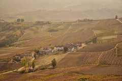 Persi nelle Langhe (leonardogiangori) Tags: vigneti vino barolo langhe