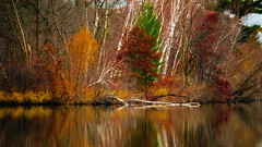 Last Shot of Autumn (Bob's Digital Eye) Tags: 2017 autumn autumncolour autumnleaves bobsdigitaleye canon canonefs55250mmf456isstm deadwood fall fallcolor flicker flickr forest h2o lakescape lakeshore landscape october reflections t3i trees water