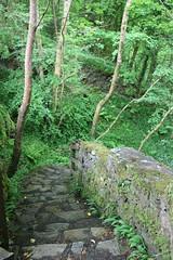 IMG_3124 (avsfan1321) Tags: connemaranationalpark connemara nationalpark ireland countygalway green lush landscape plants