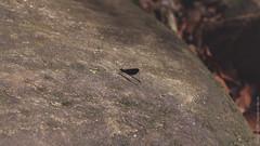 23.06-Sinharaja-Sri-Lanka-canon-1500px-041