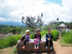 The innocent hill tribe. (natureflower) Tags: innocent hilltribe flowers field green
