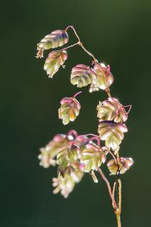 Plant light - Lumière végétale