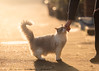 'Aggi and Hilary' (Jonathan Casey) Tags: cat rescue chums catchums norfolk jonathancaseyphotography pedigree golden hour nikon 200mm f2 d810 vr backlit
