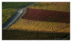 Stripes (GP Camera) Tags: nikond7100 nikonafsdx55300mmf4556gedvr landscape paesaggio countryside campagna hill collina vineyards vigneti autumn autunno colors colori textures trame abstract astratto leaves foglie road strada light luce shadows ombre lightandshadows lucieombre lighteffects effettidiluce depthoffield profonditàdicampo allaperto vignetting focus messaafuoco silence silenzio calm calma quiet quiete morning mattino thebestyellow ☯laquintaessenza☯ shades sfumature whiteframe cornicebianca italy italia piemonte monferrato darktable gimp opensource freesoftware softwarelibero digitalprocessing elaborazionedigitale