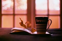 .when she reads. (Camila Guerreiro) Tags: film kodak colorplus pentaxmesuper filmsoup camilaguerreiro brazil book coffee window analog grain
